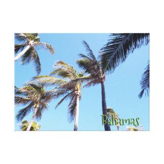 Toile Vent dans des palmiers