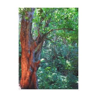 Toile Vieux manguier