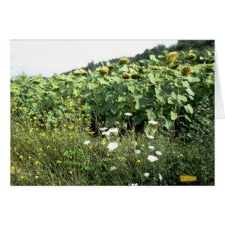 Tournesols et fleurs sauvages carte