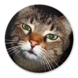 Traction de chat tigré