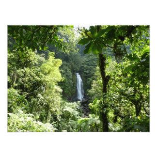 Trafalgar tombe photographie tropicale de forêt