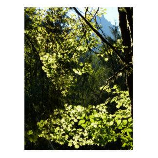Traînée inférieure d'automnes, carte postale