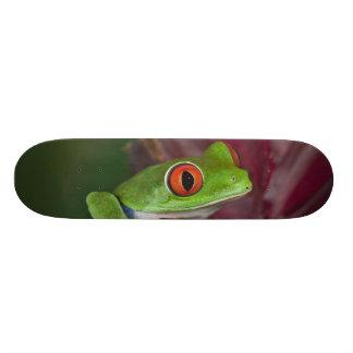 Treefrog aux yeux rouges skateboards