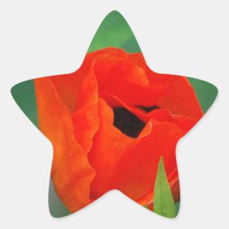 Trillende Oranje Papaver Ster Stickers