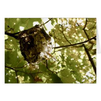 Trimestres d'été - carte de voeux de nid de viréo