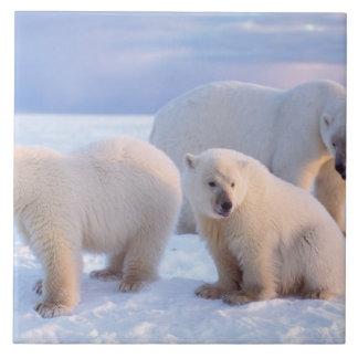 Truie d'ours blanc avec des petits animaux sur la  grand carreau carré