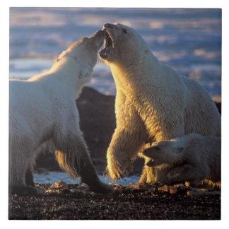 Truies d'ours blanc avec l'petit animal sur le côt grand carreau carré