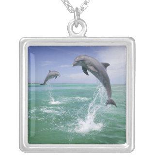 Truncatus de Tursiops de dauphins de Bottlenose) 4 Collier