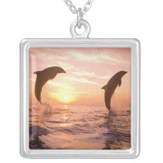 Truncatus de Tursiops de dauphins de Bottlenose) 8 Collier