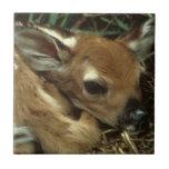 Tuile de cerfs communs de bébé carreaux