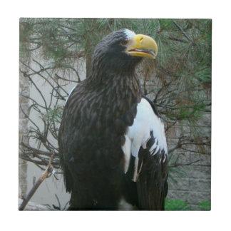 Tuile de Stellers Eagle Carreau En Céramique