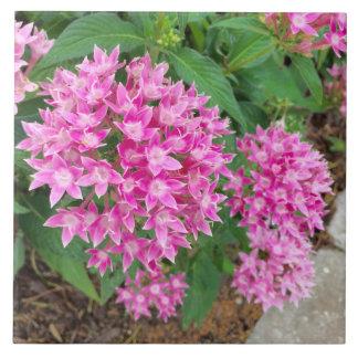 Tuile florale rose carreau