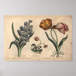 Tulipe botanique d'impression d'art de la fleur
