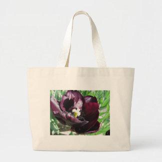 Tulipe pourpre avec des gouttelettes au printemps grand sac