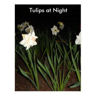 Tulipes à la carte postale de nuit