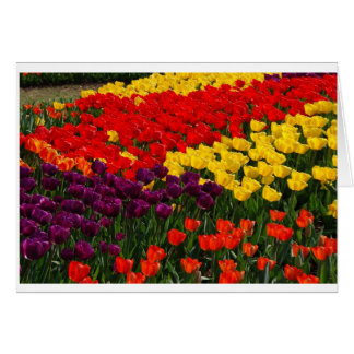 Tulipes Carte
