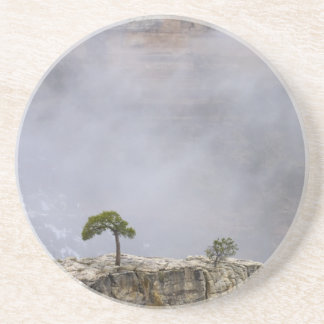 Un arbre isolé de canyon grand dessous de verres