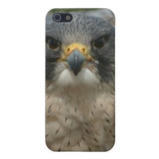 Un beau faucon étuis iPhone 5