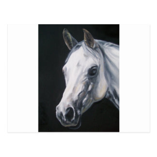 Un cheval blanc carte postale