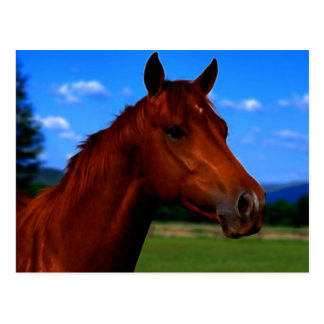 Un cheval se tenant fier carte postale