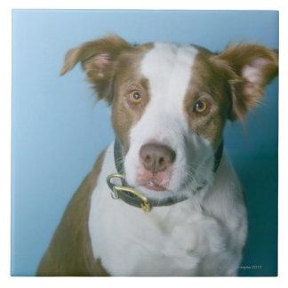 Un chien grand carreau carré