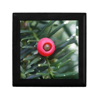 Un cône d'un if (baccata de Taxus) Boîte À Souvenirs
