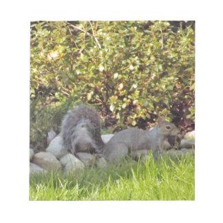 Un écureuil avec un écrou dans lui est bouche bloc-note