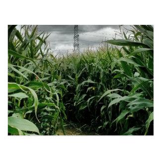 Un labyrinthe de maïs carte postale