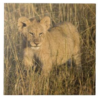 Un petit animal de lion s'étendant dans le buisson grand carreau carré