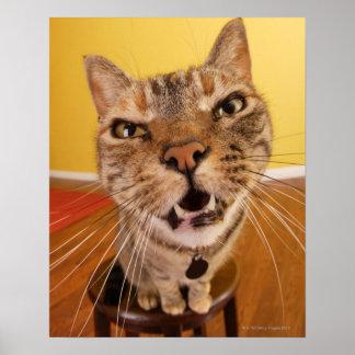 Un petit chat humoristique se repose sur un poster