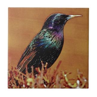 Un petit oiseau m'a indiqué la photographie petit carreau carré