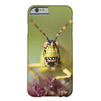 Un plan rapproché d'une sauterelle élégante coque iPhone 6 barely there