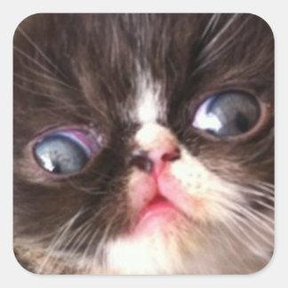 Un visage glorieux d'un chat sticker carré