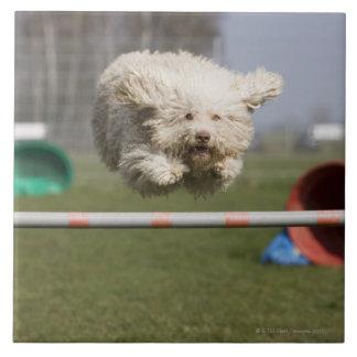 Un Waterdog portugais sautant par-dessus un obstac Carreau En Céramique