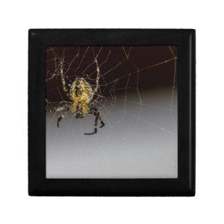 Une araignée et sa de Web fin Coffret Cadeau