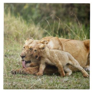 Une lionne et son petit animal espiègle grand carreau carré