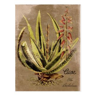 Usine vintage d'aloès de style carte postale