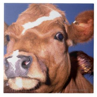 vache 2 grand carreau carré