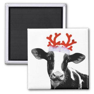Vache avec des andouillers de renne magnet carré