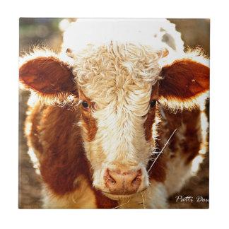 Vache Carreau