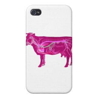 Vache mignonne anatomique coques iPhone 4/4S