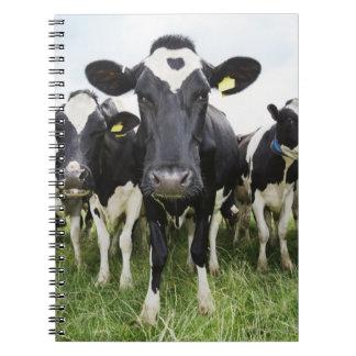 Vaches se tenant dans une rangée regardant carnets à spirale