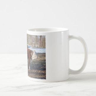 Veaux de Hereford dans le pré d'hiver avec la Mug