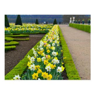 Versailles fait du jardinage des fleurs France Cartes Postales