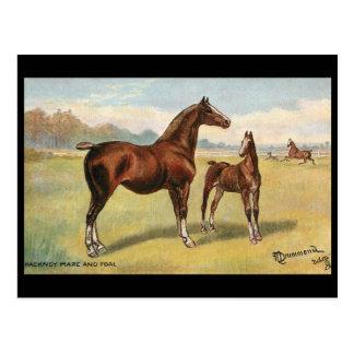 Vieille carte postale - chevaux
