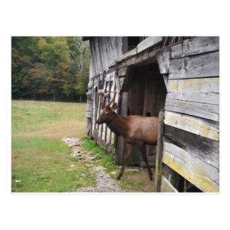 Vieille grange, élan avec des andouillers de carte postale