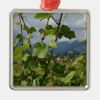 vignoble ornement carré argenté