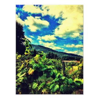 Vignobles de crique de Hightower Photo D'art