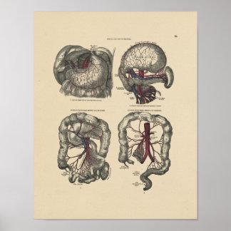 Vintage Anatomie 1880 van de Slagader Druk Poster