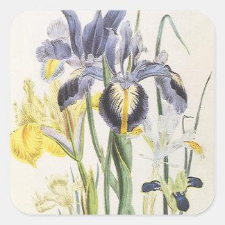 Vintage BloemenPlantkunde, de Bloemen van de Iris Vierkante Stickers